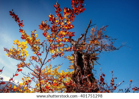 Tree canopy in autumn beech forest against the blue sky. - stock photo