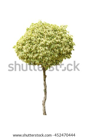 Tree canopy in isolated background - stock photo