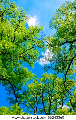 Tree canopy in spring time - stock photo
