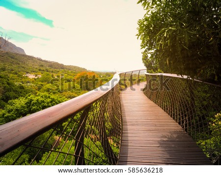 Tree Canopy Walkway (wooden bridge) in Kirstenbosch National Botanical Garden is acclaimed as one & Tree Canopy Walkway Wooden Bridge Kirstenbosch Stock Photo ...