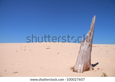 Tree carcase in the middle of dry sand dunes