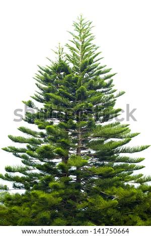 tree christmas pine fir white - stock photo
