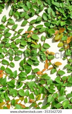 Tree climbing walls - stock photo