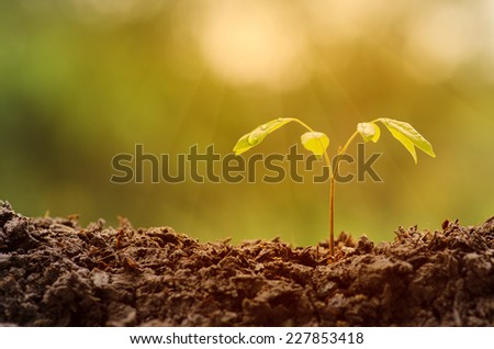 Tree,Close up Young plant growing with rain water drop - stock photo
