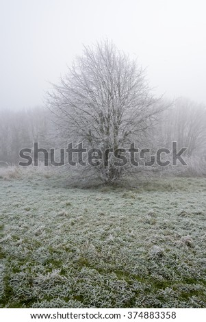 Tree covered in frost on a cold and foggy Winters day - stock photo