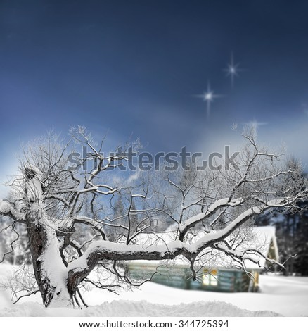 Tree covered in snow in winter evening with stars in sky and log cabin in background - stock photo