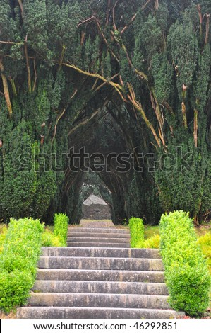 Tree Covered pathway - stock photo