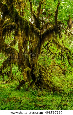 Tree covered with moss in the temperate Hoh Rain Forest.,Olympic National Park, Washington State, USA