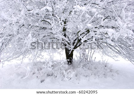 Tree covered with snow in winter.