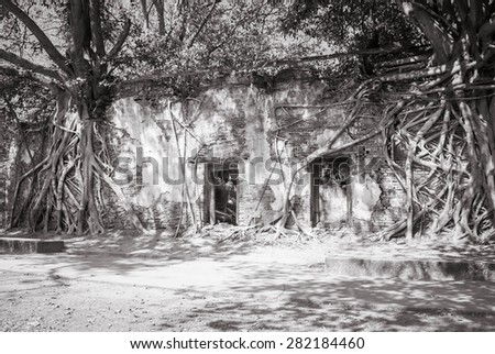 tree covering the stones of the temple,black and white,vintage photo