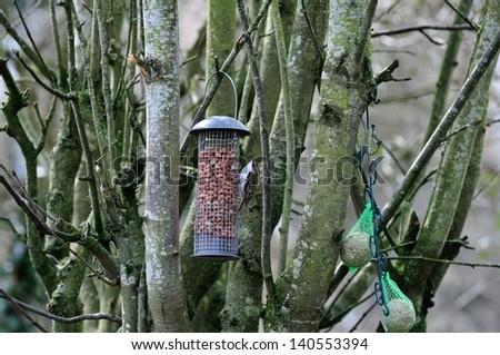 Tree creeper on a peanut feeder. - stock photo