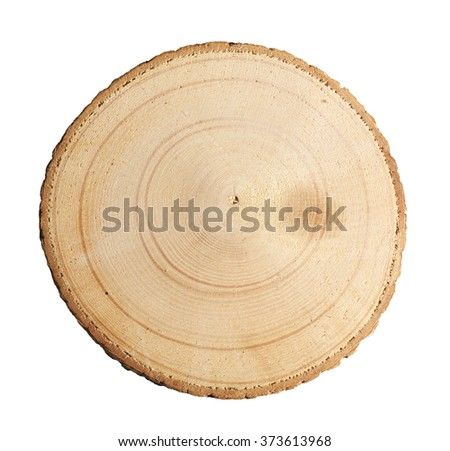Tree cut isolated on white background