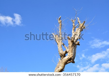 tree dead sky blue nature background dry clouds old wood tree