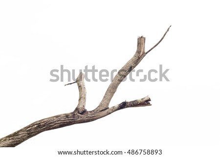 tree death on white background.
