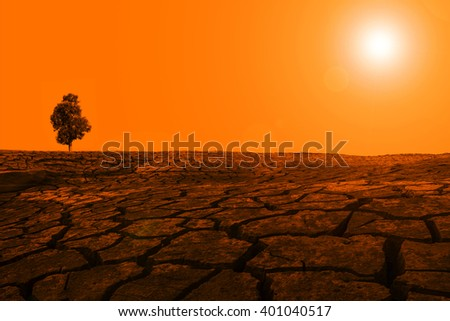 Tree desert sunset