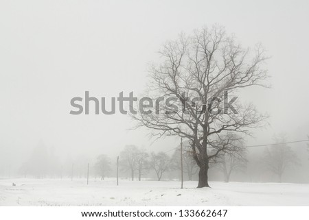 Tree detail on the field during winter