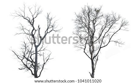 tree dry isolated on white background and clipping path.