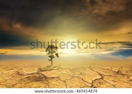 Tree dry soil texture background