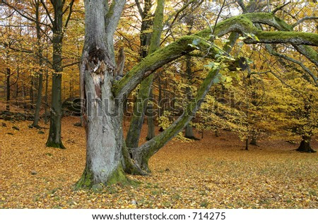 tree during autumn wit hbrown leaves on the ground G?teborg Sweden