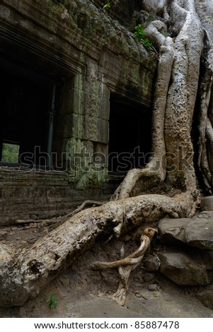 Tree embracing temple in Angkor Wat - stock photo