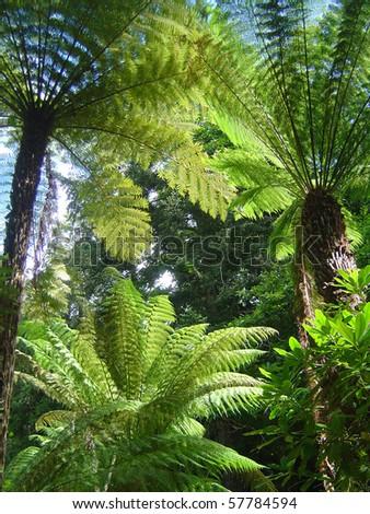 Jurassic plants - photo#26