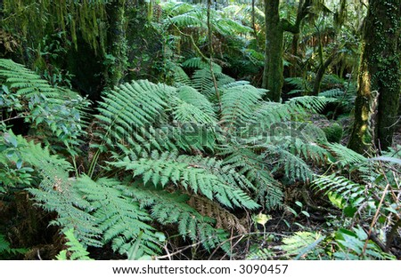 tree ferns under the main canopy of oxley world heritage rainforest