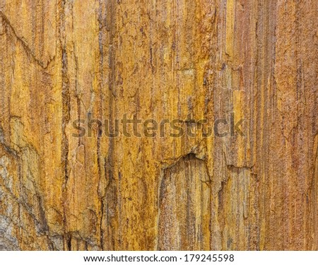 tree fossil texture - stock photo