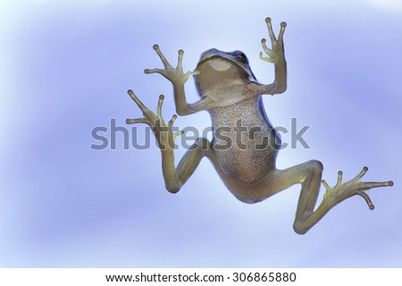 Tree frog in blue backgroud - stock photo