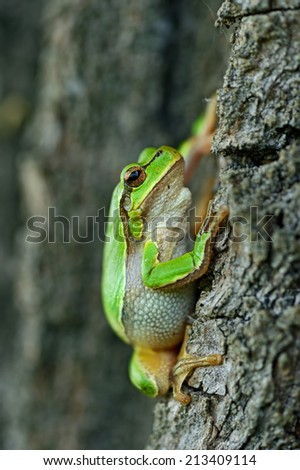 Tree frog in its natural habitat in the spring
