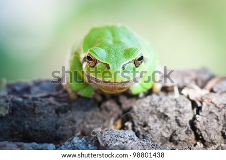 Tree frog sitting on a trunk - stock photo