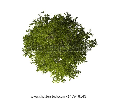 trees from above stock images royalty free images vectors shutterstock. Black Bedroom Furniture Sets. Home Design Ideas