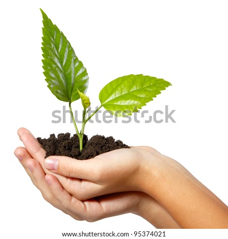 tree green fresh in female hand isolated on background