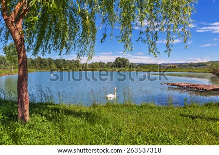 Tree, green grass and small lake on background in Piedmont, Northern Italy. - stock photo