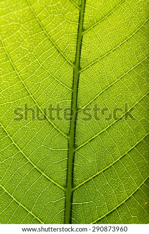 Tree green leaf close up - stock photo