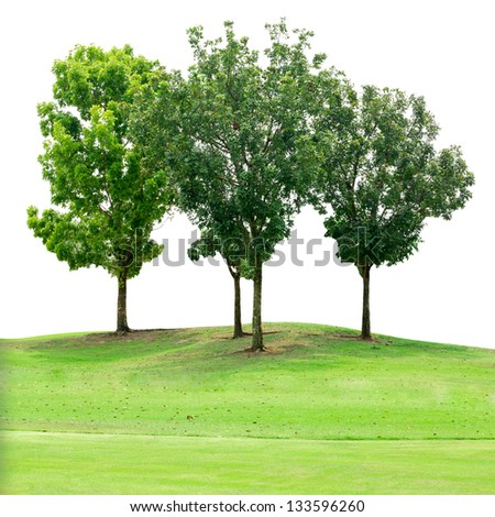 Tree group on grass field isolated on white  - stock photo