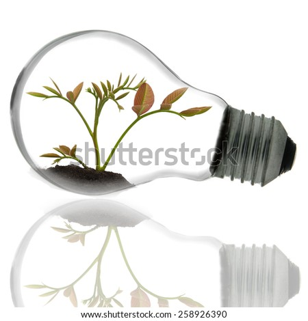tree grow in a light bulb isolated - stock photo
