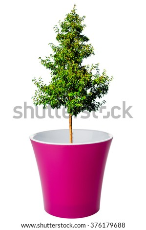 Tree growing from flower pot - stock photo