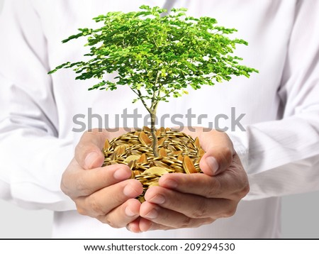 Tree growing from money in hands  - stock photo