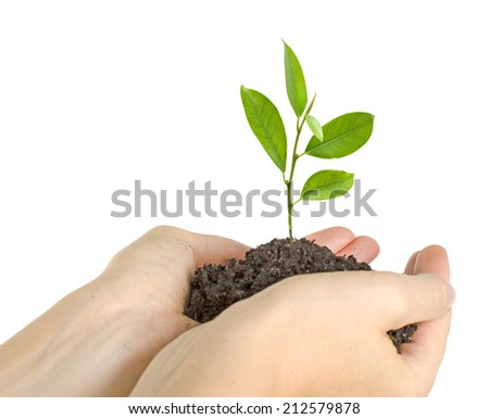 Tree growing from soil - stock photo