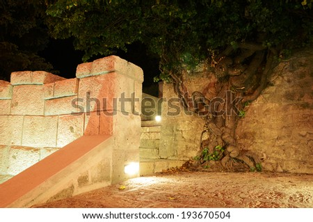 tree growing in the wall - stock photo
