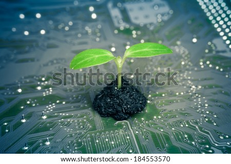 tree growing on a computer circuit board / green it / green computing / csr / it ethics - stock photo