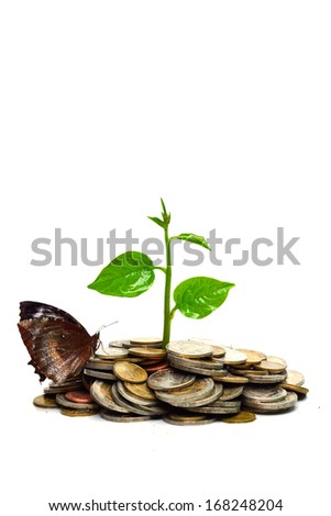 tree growing on coins with a butterfly / csr / sustainable development
