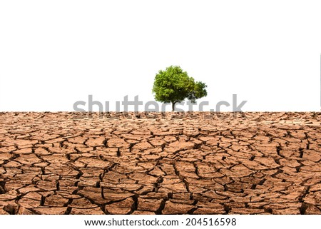 tree growing on cracked earth - stock photo