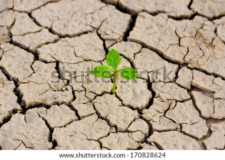 tree growing on cracked earth / growing tree / save the world / environmental problems / cut tree - stock photo