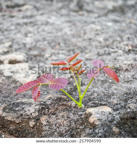 Tree growing on rock crack - stock photo