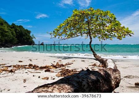 Tree growing towards the sea on the beach - stock photo