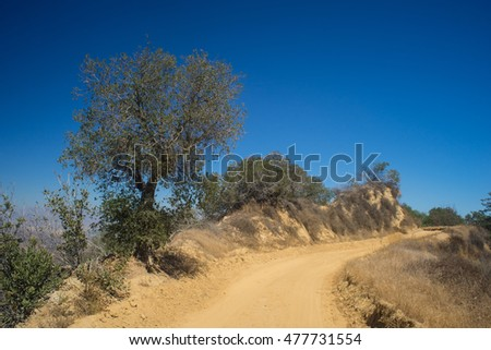 Tree grows over a bend in a mountain dirt road near the San Fernando Valley in California.