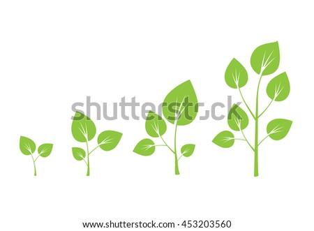 Tree growth diagram. Green tree growth  - stock photo