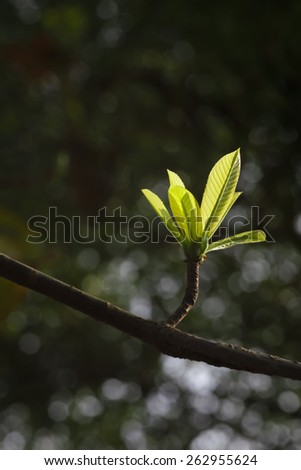 Tree Growth - Young Leaves - stock photo