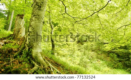 tree HDR - stock photo